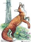 Myslivecký terč - liška